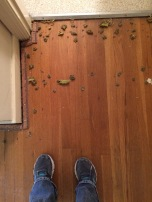 A few of the staples I removed. I hate carpet and wallpaper now.